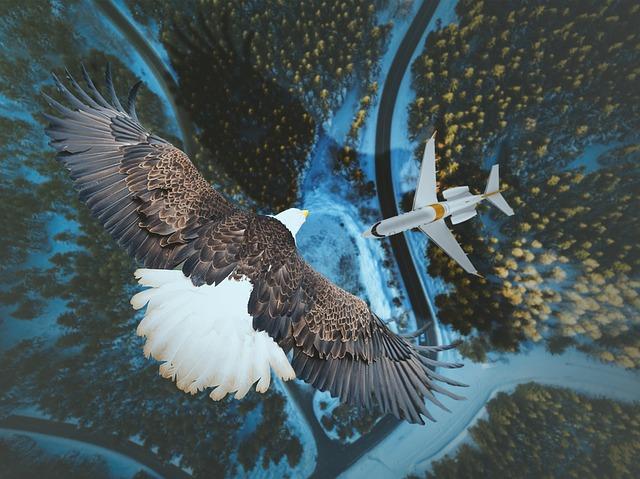 Чем отличается птица от самолета